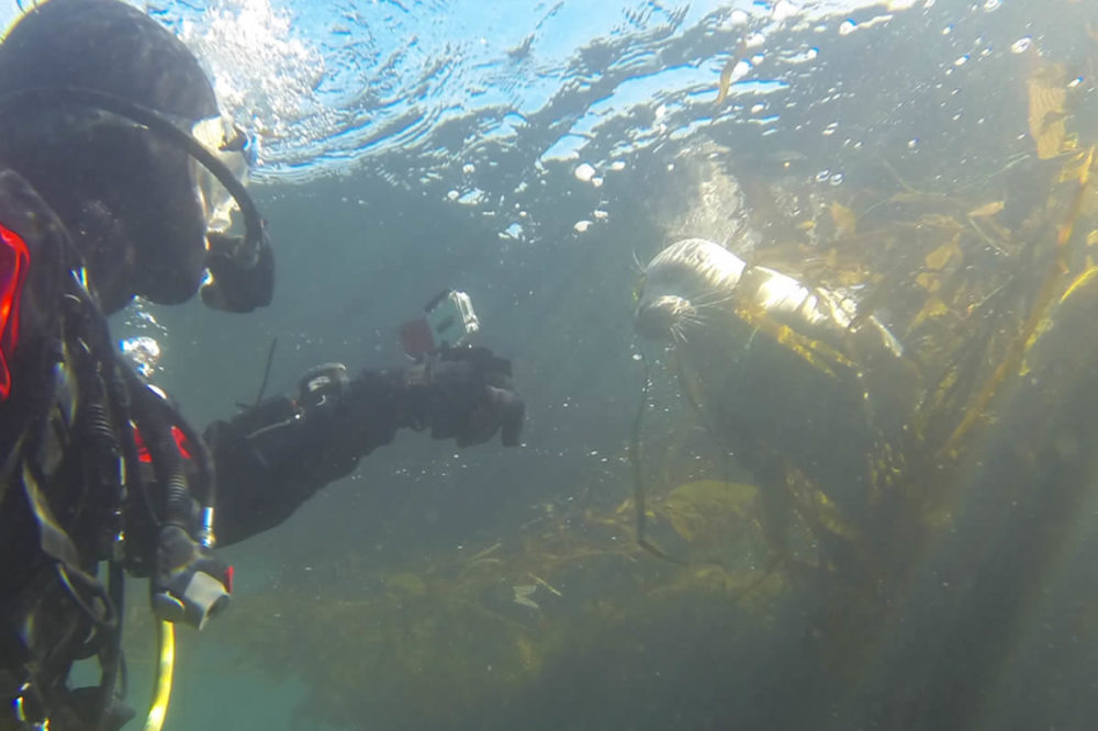 Diving Lessons and Scuba Certification – Learn to dive and get a ...